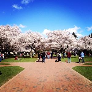 Blossom at University of Washington