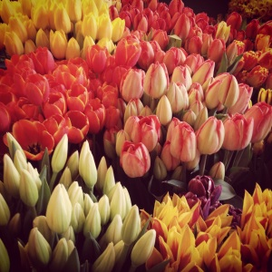 Tulips for sale at Pike Place Market