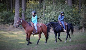 Riding horses at CORE
