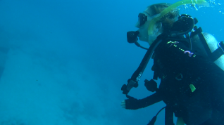 AUS scuba-diving on the reef.png