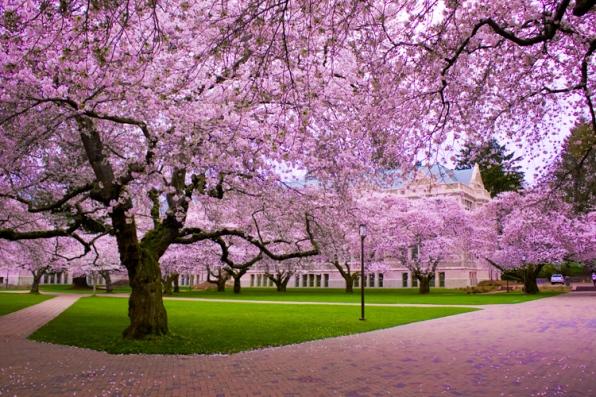 4 tips for spring.jpg