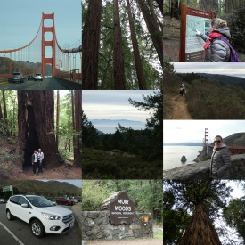 Collage Muir Woods